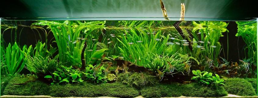 Vodne Rastline Akvaristika Vodne Rastline