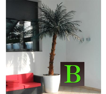 umetna palma - kokos palma