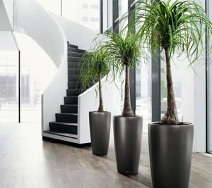 Izposojamo umetne palme in umetna drevesa