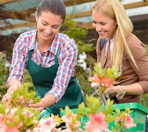 Prodaja umetno cvetje-rastline Bonsai Trzin