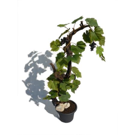 Umetna trta + grozdje