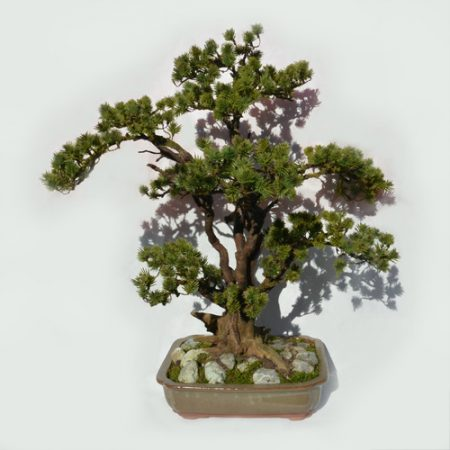 Umetni bonsai Pinija borovec