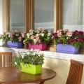 cvetlično korito balkon balkonske rože balkonsko korito za rože balkonsko cvetje