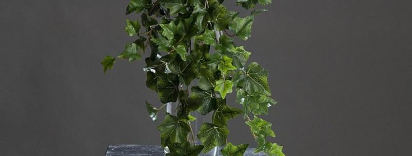umetne rastline plezalke bršljan ovijalke rože