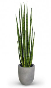 umetne rastline umetne plezalke