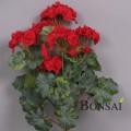 balkonsko cvetje umetne geranije bršlinke