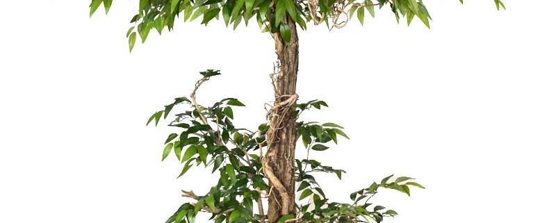 umetno drevo umetno drevje kakovostne umetne rastline Bonsai Trzin
