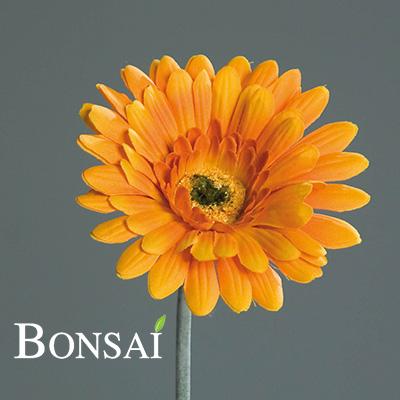 umetna gerbera oranžna umetno cvetje