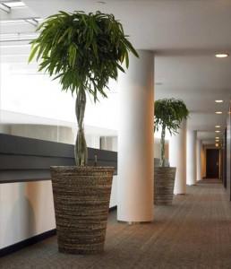 umetna drevesa notranja oprema dekoracija pisarne