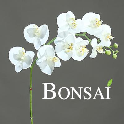 orhideja veja bela 100 cm