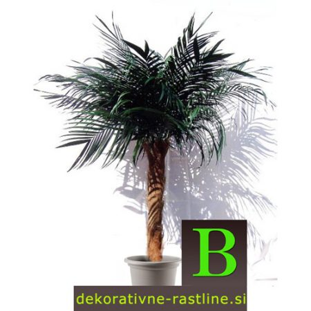 umetne palme umetna palma kokos 160cm