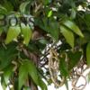 umetno drevo Nature umjetna stabla Kunstbaum