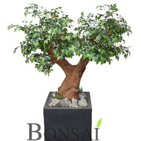 Ficus bonsai umetni bonsai dvojni Ficus bonsai 145