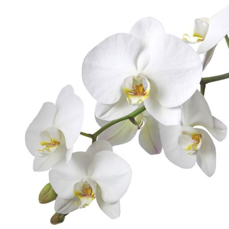 Umetno cvetje