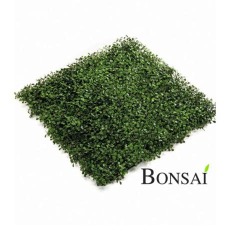 zelene stene pušpan zeleni paneli pušpan bux buxus