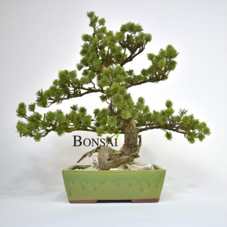 Umetni bonsai Pinus - umetni bonsaji iglavci - okrasni bonsai