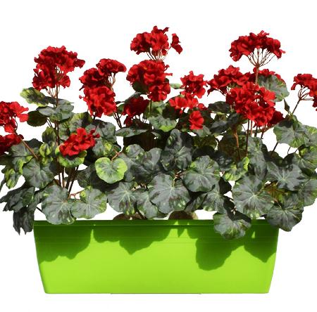 balkonske rože balkonsko cvetje Geranije - umetne geranije - rdeče geranije
