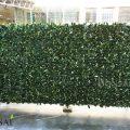 zelene stene green wall Lovorikovec