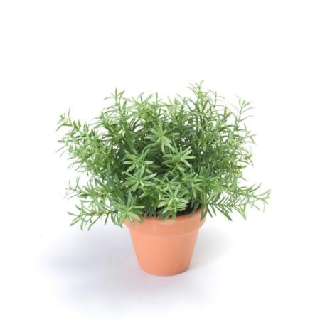 Rožmarin v lončku 20 cm