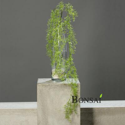 Umetna plezalka Asparagus 125 cm - umetna plezalka - okrasna plezalka - viseča plezalka