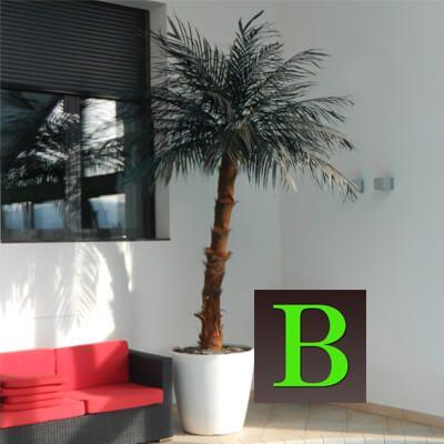 umetna palma kokos palma umetne palme