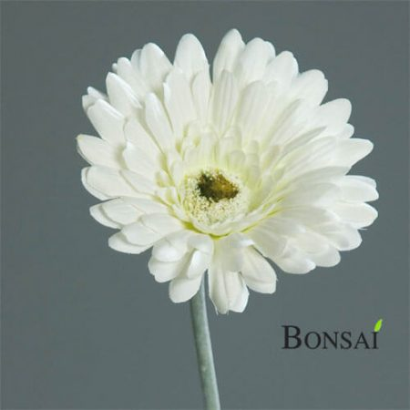 Umetna gerbera bela barva 56cm - umetno cvetje