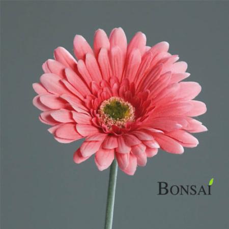 umetna gerbera roza 56 cm - okrasna gerbera - umetna gerbera - roza gerbera