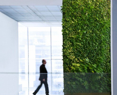 zelena stena - zeleni paneli ozelenitev