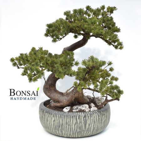 Umetni bonsai Pinija Japan - okrasni bonsai - bonsai Pinja