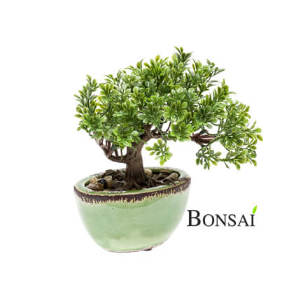 umetni bonsai v glazirani posodi 20 cm Ficus - okrasni bonsai - umetni bonsai - mini bonsai
