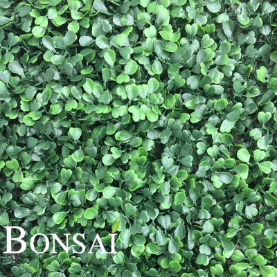 zelene stene - green wall pušpan buxus bux
