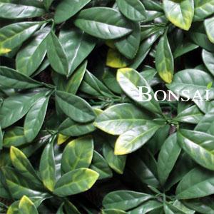 Zelene stene - zeleni paneli by Bonsai
