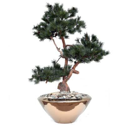 Umetni borovec 150 cm v zlati posodi umetni bonsai