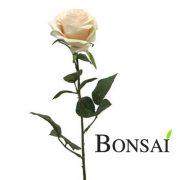 Vrtnica belo svetlo roza 63 cm