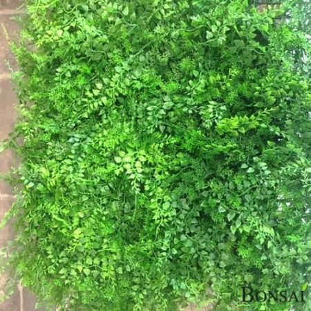 Zeleni panel Zelenolistnati mešan