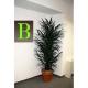 Areka palma 180cm