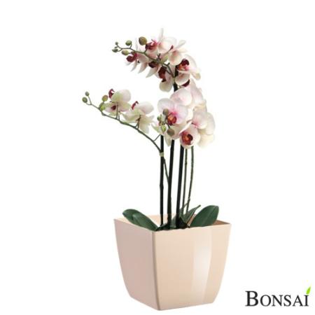 Aranžma orhideje real touch v lončku 60cm belo-roza