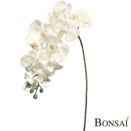 Orhideja veja krem barve 104cm