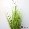 Okrasna trava v lončku 90 cm