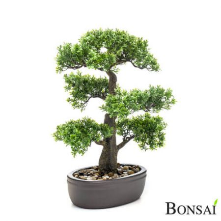 Bonsai Fikus 42 cm