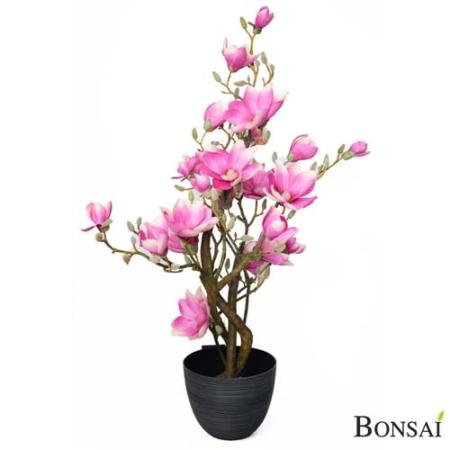 Drevo magnolija 110 cm