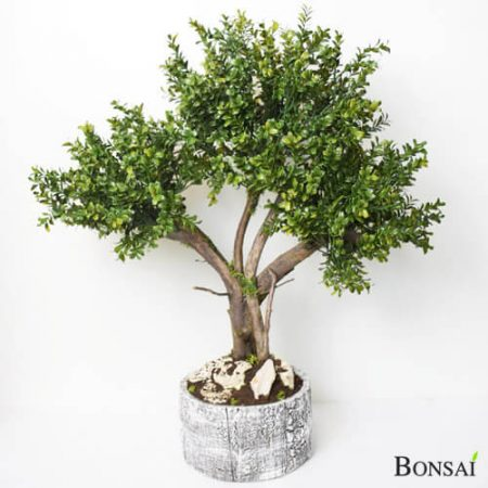 Pušpan bonsai 70 cm - pušpan bonsai - umetni bonsai