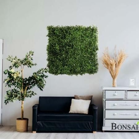 zelene stene pušpan - umetne rastline Bonsai