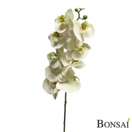 Orhideja bela 108 RT