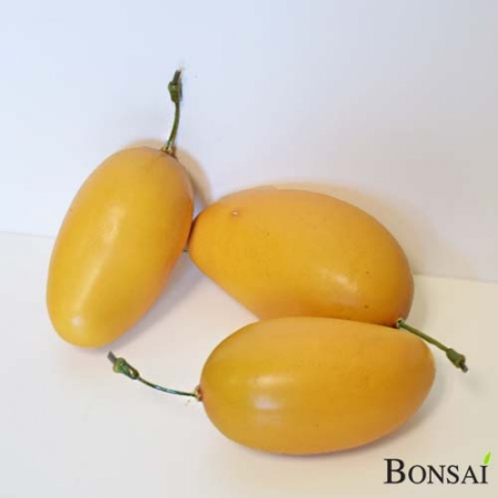 Umetni mango ( 10 kos ) 15 cm
