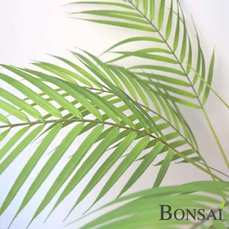 Umetna palma