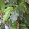 Umetno drevo Fikus benjamin 140 cm