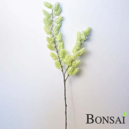 Islandski hmelj veja 70 cm