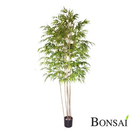 Bambus Panda 240 cm