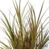Umetna trava v lončku rdečkasta z UV zaščito 115 cm TREND2019